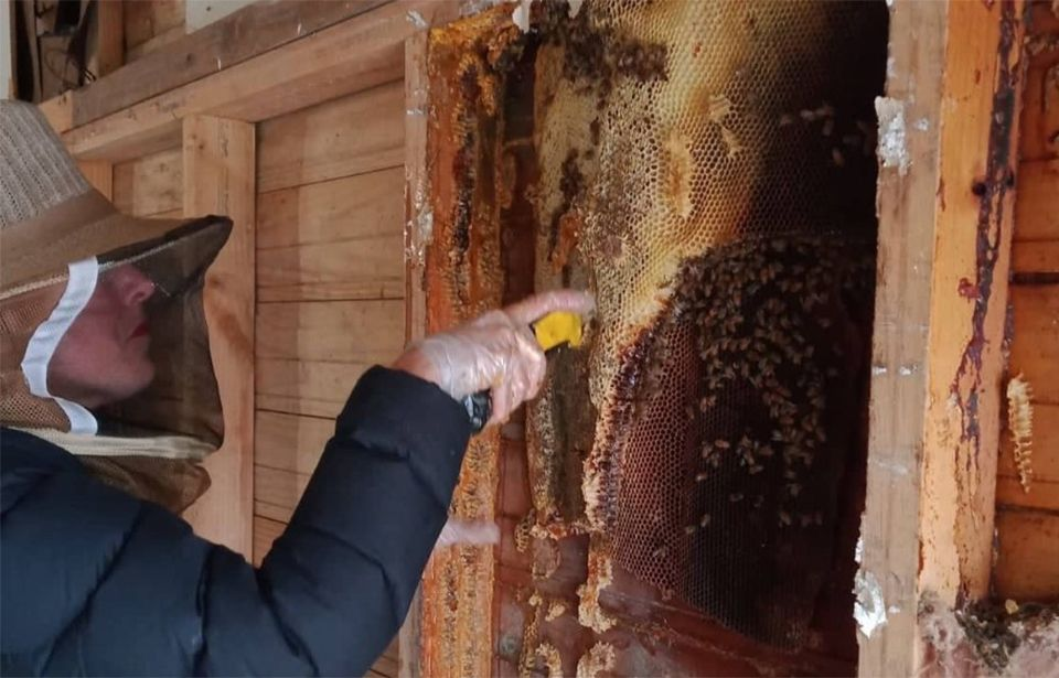 Beekeeper calls for protection of wild hives