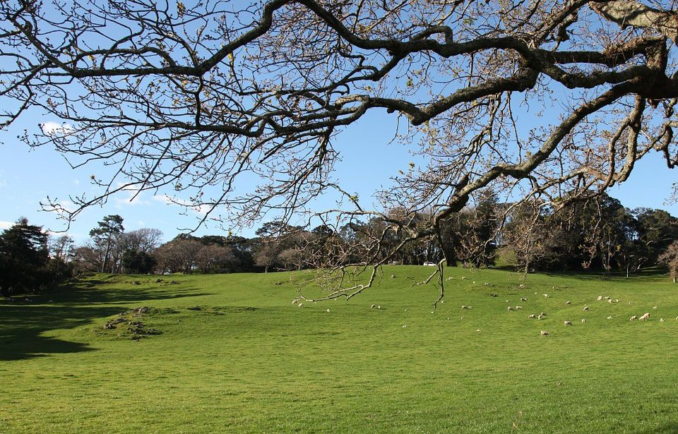 Find out which Auckland parks are agrichemical-free